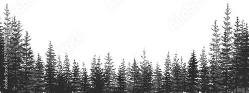 Fotografia, Obraz Forest