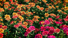 Multicolored Flower Background. Floral Wallpaper With Yellow, Orange And Red Roses. 3D Render