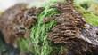 Kompozycja grzybow na powalonym pniu drzewa