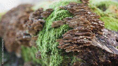 Obraz Kompozycja grzybow na powalonym pniu drzewa - fototapety do salonu