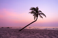Silhouette Of A Coconut Tree At Sunrise In On Hua Hin Beach, Thailand.