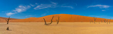 Panorama View Of Dead Camelthorn Trees And Red Dunes In Deadvlei, Sossusvlei, Namib-Naukluft National Park, Namibia