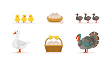 Various Breeds Of Poultry Set, Goose With Goslings And Turkey With Turkey Poults Cartoon Vector Illustration