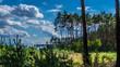 młody las Kużnica Brzeźnicka