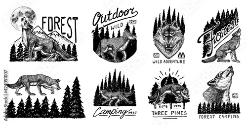Fototapeta Gray wolf logo and badge. Forest and mountain and hill. Double exposure Concept. A predatory beast. Wild forest animal. Vector Engraved hand drawn Vintage old sketch for tattoo, t-shirt or typography. obraz