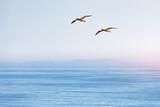 Fototapeta Kawa jest smaczna - Flying gannet on blue sky