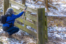 Mature Woman Filming With Her Mobile Phone Gimbal Tripod Head Stabilizer Behind A Wooden Fence The Vegetation In A Nature Reserve, Winter Day In Stammenderbos In South Limburg, Netherlands