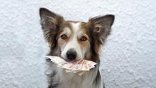 Dog Holding Money