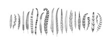 Hand Drawn Rustic Ethnic Decorative Long Feathers. Tribal Bird Feathers Collection. Vector Ink Illustration Isolated On White Background. Black And White Geometric Ornament, Graphic Design Element.