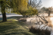 Willow Tree Over Misty Pond