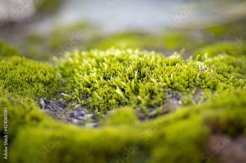Musgo verde en el bosque