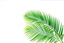 Palm Leaf Isolated On White Background.