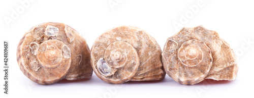 Fotografie, Obraz A row of conch shells