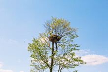 Big, Heavy And Rich Bird's Nest In The Branches Of Deciduous Tree On The Blue Sky Background. Hello New Life, Spring And Summer. Have A Place For Text