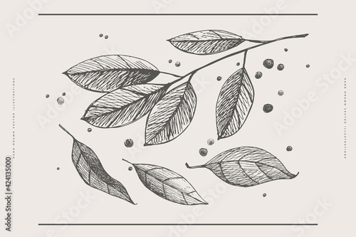 Obraz Hand-drawn leaves, a branch of laurel and peppercorns on a light isolated background. A set of spices for cooking. Organic food concept. Vector illustration. - fototapety do salonu