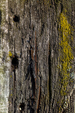 Old Dry Tree, Bark Texture. Close Up Old Wood Texture. Cracked Dead Old Tree Background Vertical Image.