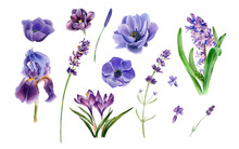 Watercolor Violet Flowers Clipart. Purple Floral Element Set. Anemone, Tulip, Iris, Crocuses, Lavender, Hyacinth. Botanical Illustration For Cards, Wedding Invitation, And Other Decoration.