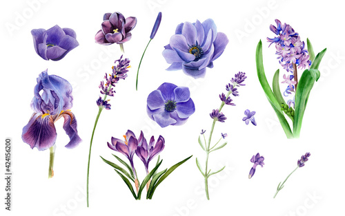 Fotografie, Obraz Watercolor violet flowers clipart