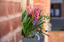 Fleurs Decoration Soleil Printemps Maison Balcon Vert Brique Immobilier