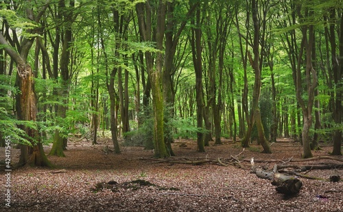 Fotografie, Obraz Walkway in a green spring forest