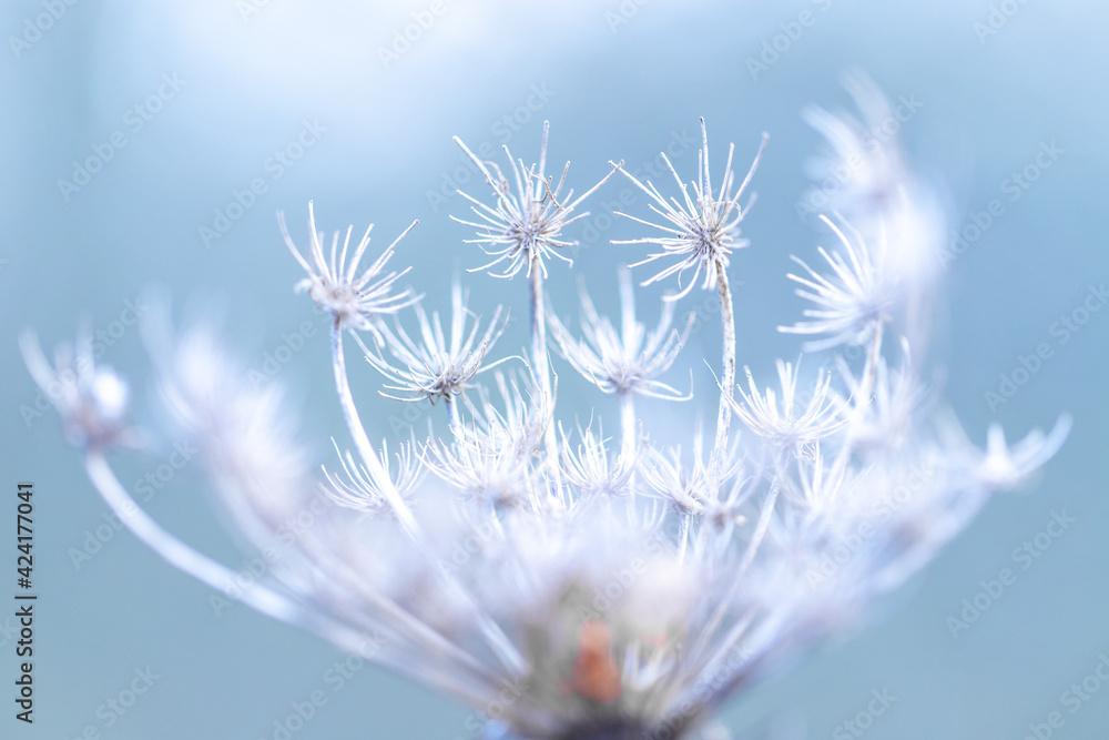 Fototapeta Kwiaty, natura przed wiosną