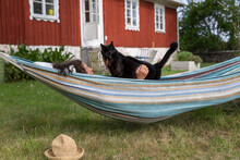 Woman With Cat On Hammock