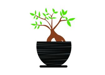 kwiat, drzewko, dom, ogród, sztuka, poezja, doniczka, balkon, liście, opieka, kobieta, prezent