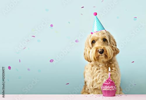 Obraz Dog with birthday cake and confetti - fototapety do salonu