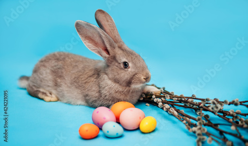 Fotografie, Obraz Grey fluffy Easter bunny sits on a blue background and near it lie Easter multi-colored eggs and branches of willow