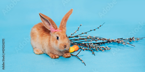 Obraz na plátně A ginger fluffy Easter bunny sits on a blue background and near it lie Easter multi-colored eggs and branches of willow