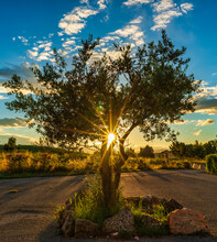 The Rays Of The Evening Sun Behind A Lonely Tree