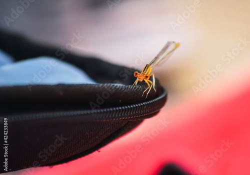 Canvas MACRO INSECTS PHOTOGRAPHY