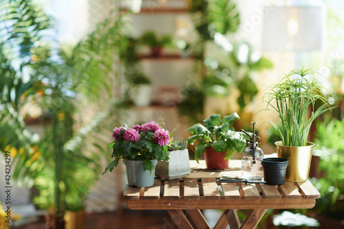 Obraz potted plant in modern living room in sunny day - fototapety do salonu