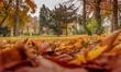 aleja parkowa jesienią, piękne kolorowe liście