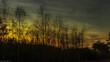 piękny zachód słońca nad leśnymi drzewami