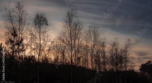 Obraz piękny zachód słońca nad leśnymi drzewami - fototapety do salonu