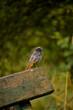 barwny ptak na ławce