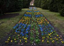 Planting Flowers In The Park In Spring. A Flower Bed With Colorful Flowers In The Park In Early Spring