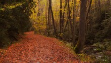 Autumn Hiking Trail In Mountains Riverside