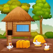 Chickens And Chicken Coop In The Farm