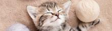 Sleeping Tabby Kitten With Balls Of Wool Panoramic Banner