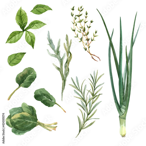 Beautiful set with watercolor hand drawn greens food. Stock illustration.