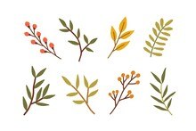 Set Of Different Branches With Leaves, Red Berries. Leaf Of Foliage Plant. Collection Of Botanical Design Elements. Colored Flat Vector Illustration Of Autumn Herbarium Isolated On White Background