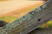 Moss On Wooden Fence In Morning Sun