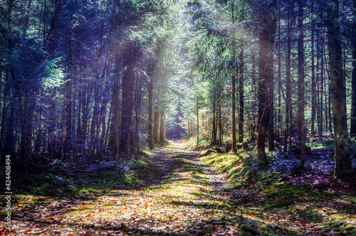 Canvas path in the woods in the bavarian forest