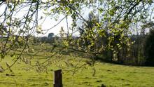 Árbol Junto A Camino Rural Y Valla De Alambres