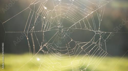 Tela de araña en valla de pradera verde a contraluz