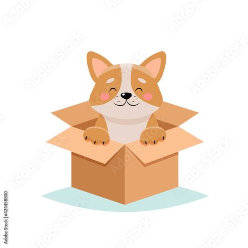 Obraz Adopt a pet - cute dog in a box, isolated on white background - fototapety do salonu