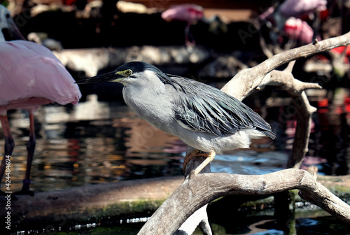 Fototapeta premium Bird standing on a branch