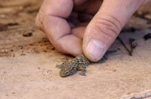 Hand And Lizard